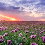Begrafenisverzekering, bloemen