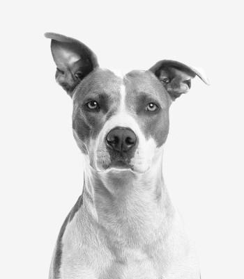 hondenverzekering uitvaart