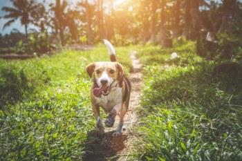 huisdierenverzekering uitvaart