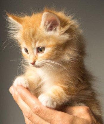 Kattenverzekering met begrafenis