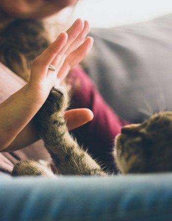 Kattenverzekering uitvaart regelen