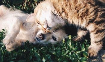 uitvaartverzekering huisdier