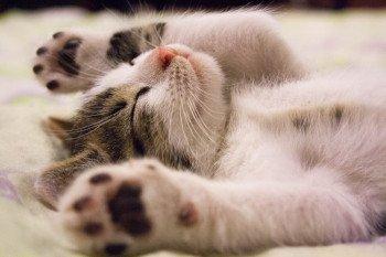 uitvaartverzekering kat